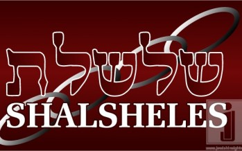 Shalsheles & Shalsheles Junior Updates!
