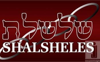 Shalsheles & Shalsheles Junior Updates!