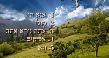 Yisroel Tzvi – Koily